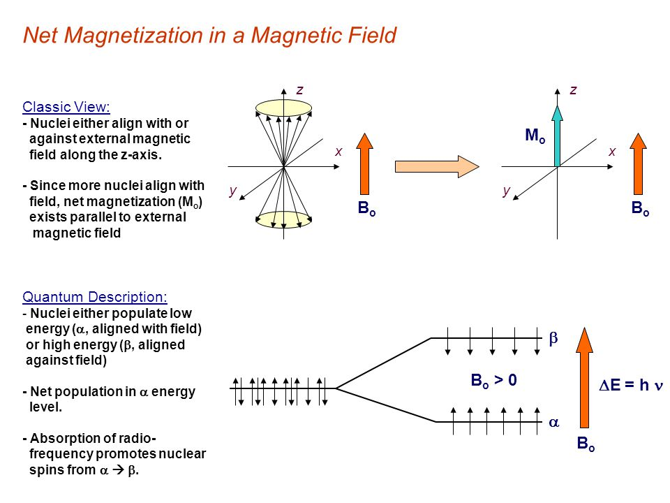 Net Magnetization in a Magnetic Field MoMo y x z x y z BoBo BoBo B o > 0  E = h   BoBo Classic View: - Nuclei either align with or against external