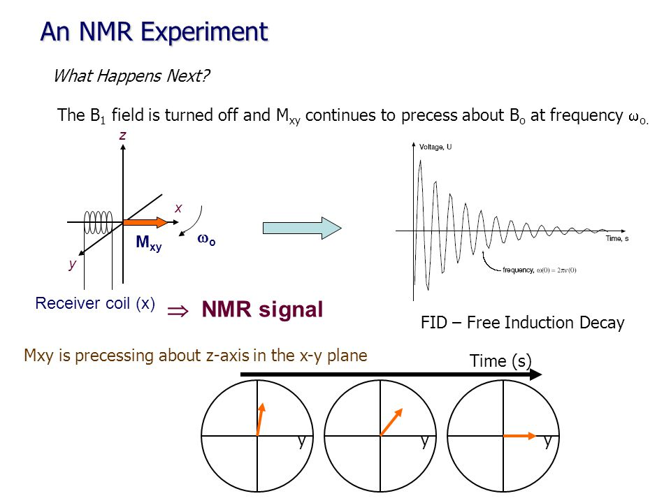 An NMR Experiment What Happens Next? The B 1 field is turned off and M xy continues to precess about B o at frequency  o. z x M xy Receiver coil (x)