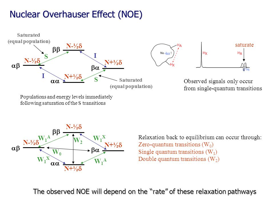 Nuclear Overhauser Effect (NOE)     N+½  I I S S Populations and energy levels immediately following saturation of the S transitions N+½  N-