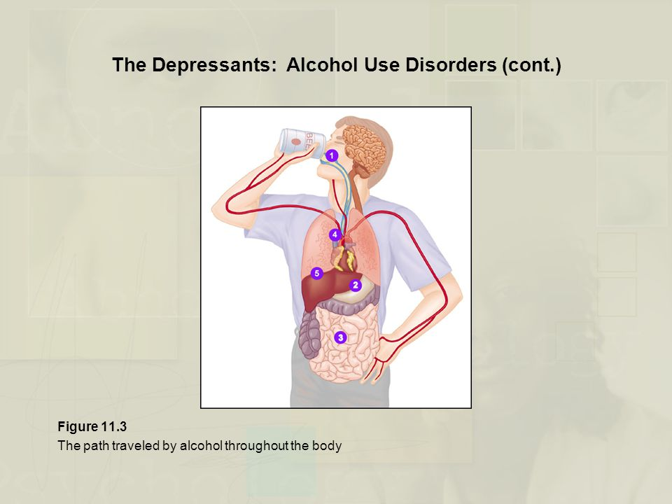 The Depressants: Alcohol Use Disorders (cont.) Figure 11.3 The path traveled by alcohol throughout the body