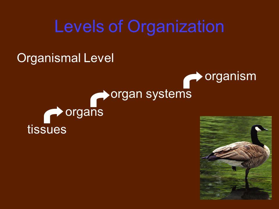 11 Levels of Organization Organismal Level organism organ systems organs tissues