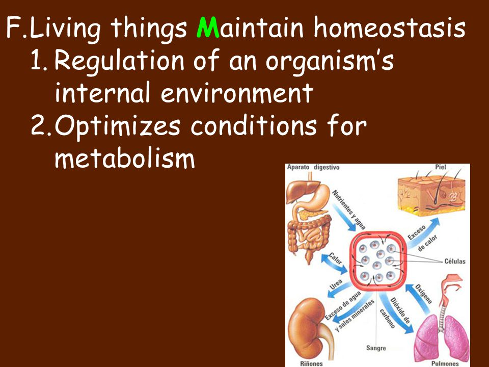 F.Living things Maintain homeostasis 1.Regulation of an organism's internal environment 2.Optimizes conditions for metabolism
