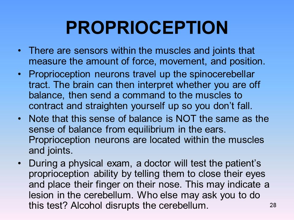 PROPRIOCEPTION There are sensors within the muscles and joints that measure the amount of force, movement, and position. Proprioception neurons travel