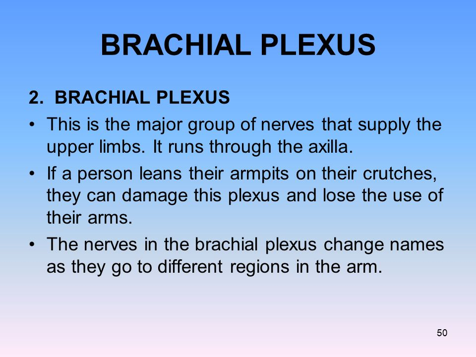 BRACHIAL PLEXUS 2. BRACHIAL PLEXUS This is the major group of nerves that supply the upper limbs. It runs through the axilla. If a person leans their