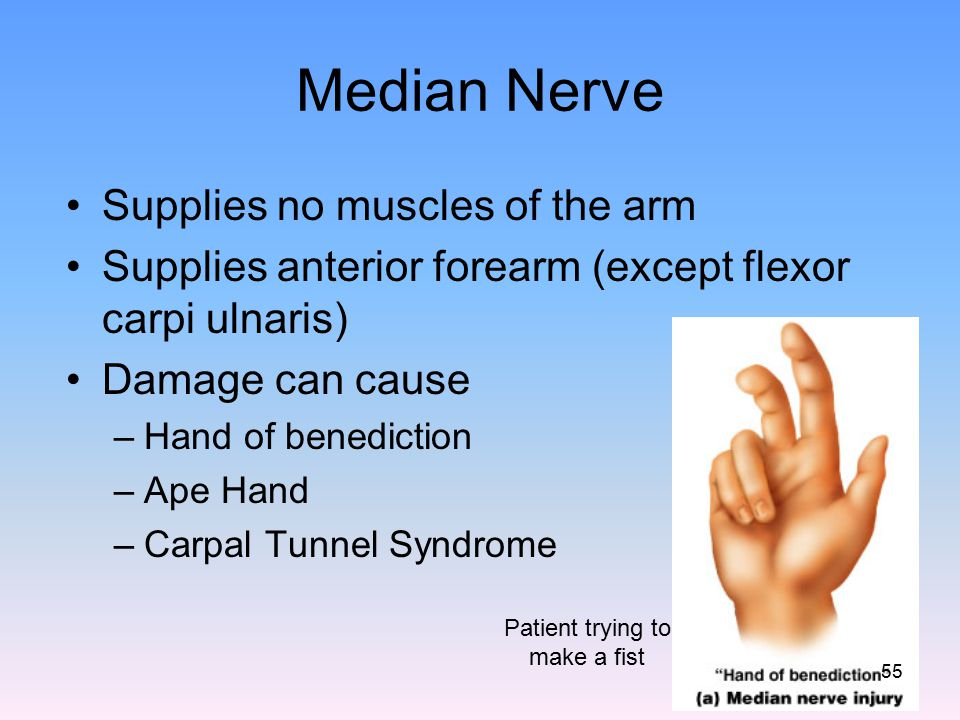 Median Nerve Supplies no muscles of the arm Supplies anterior forearm (except flexor carpi ulnaris) Damage can cause –Hand of benediction –Ape Hand –C