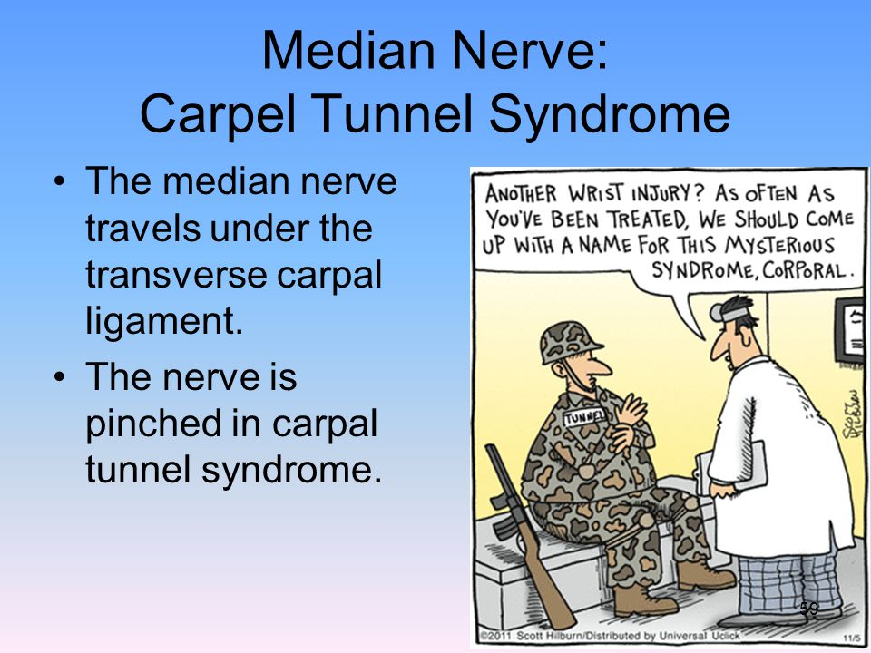 Median Nerve: Carpel Tunnel Syndrome The median nerve travels under the transverse carpal ligament. The nerve is pinched in carpal tunnel syndrome. 59