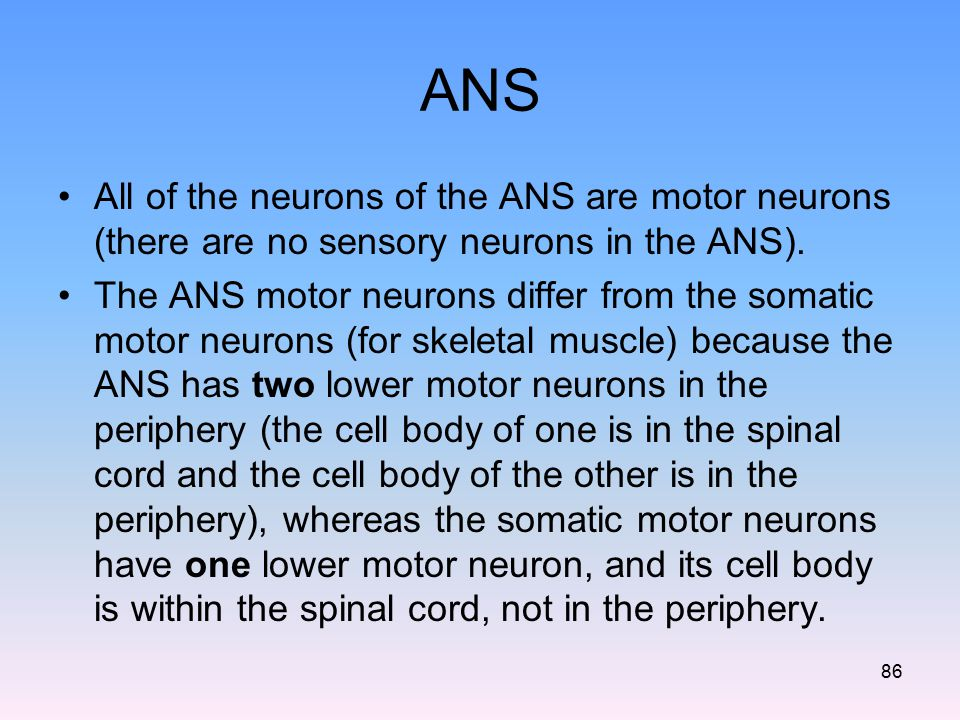 ANS All of the neurons of the ANS are motor neurons (there are no sensory neurons in the ANS). The ANS motor neurons differ from the somatic motor neu