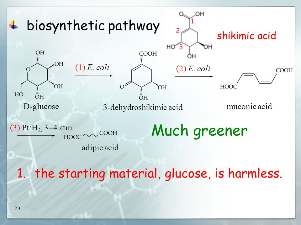 23 biosynthetic pathway D-glucose (1) E.