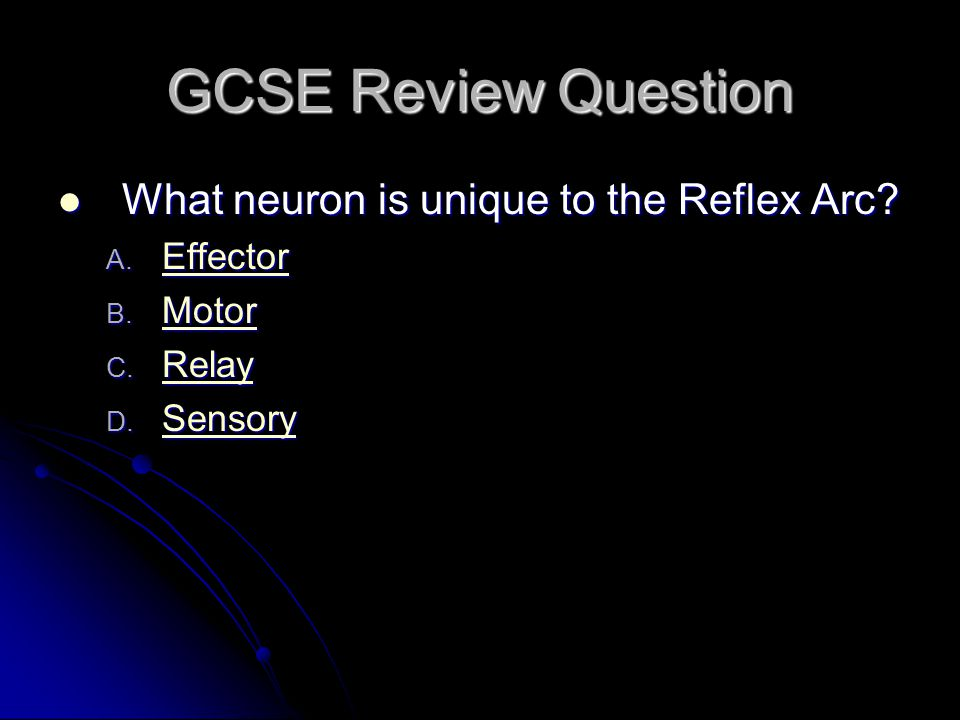 GCSE Review Question What neuron is unique to the Reflex Arc? What neuron is unique to the Reflex Arc? A. Effector Effector B. Motor Motor C. Relay Re