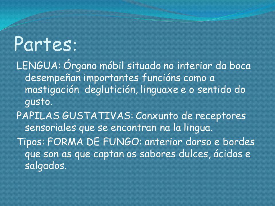 Partes : LENGUA: Órgano móbil situado no interior da boca desempeñan importantes funcións como a mastigación deglutición, linguaxe e o sentido do gust