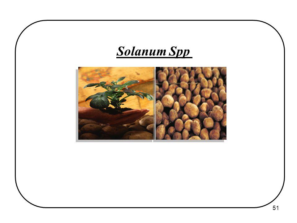 51 Solanum Spp