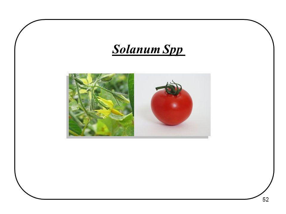 52 Solanum Spp