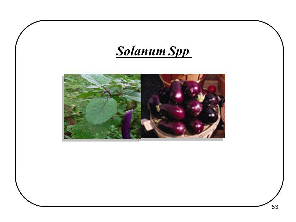 53 Solanum Spp