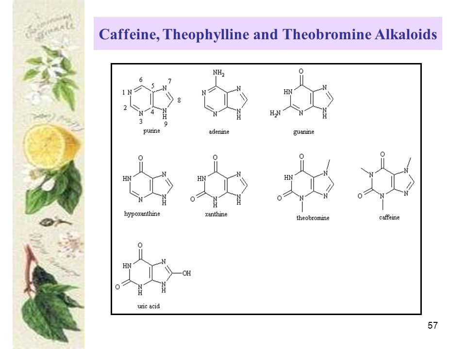 57 Caffeine, Theophylline and Theobromine Alkaloids