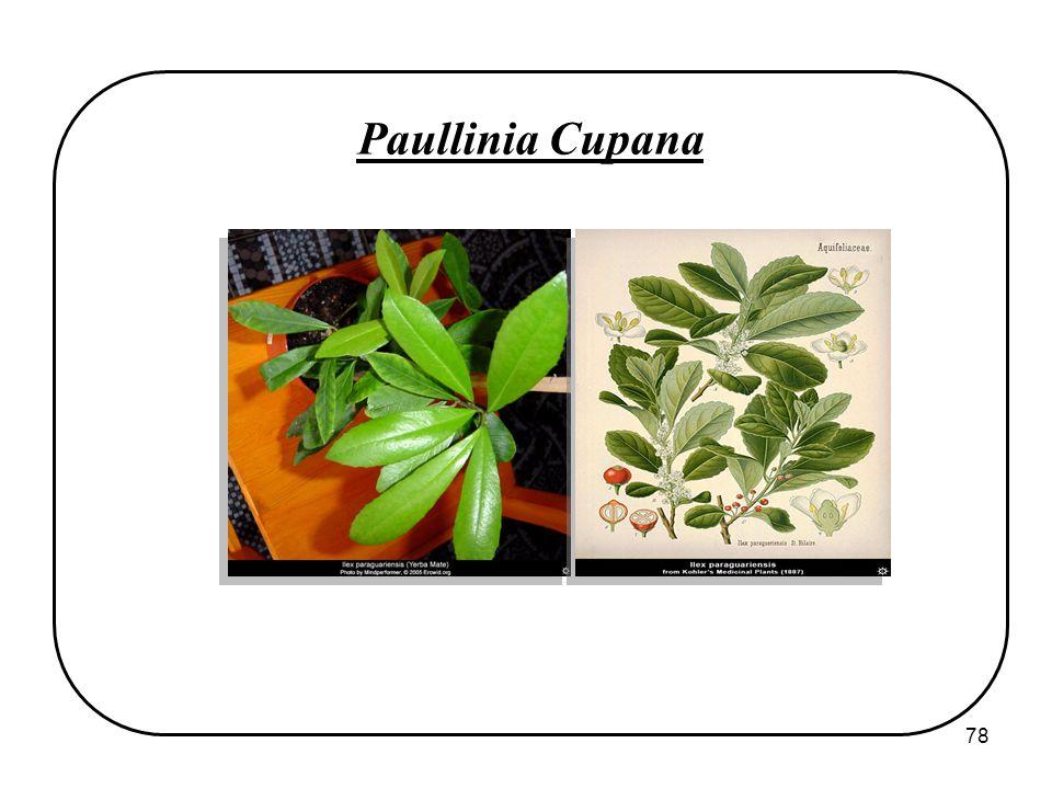 78 Paullinia Cupana