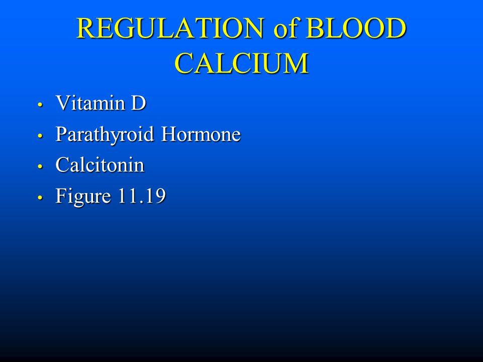REGULATION of BLOOD CALCIUM Vitamin D Vitamin D Parathyroid Hormone Parathyroid Hormone Calcitonin Calcitonin Figure 11.19 Figure 11.19