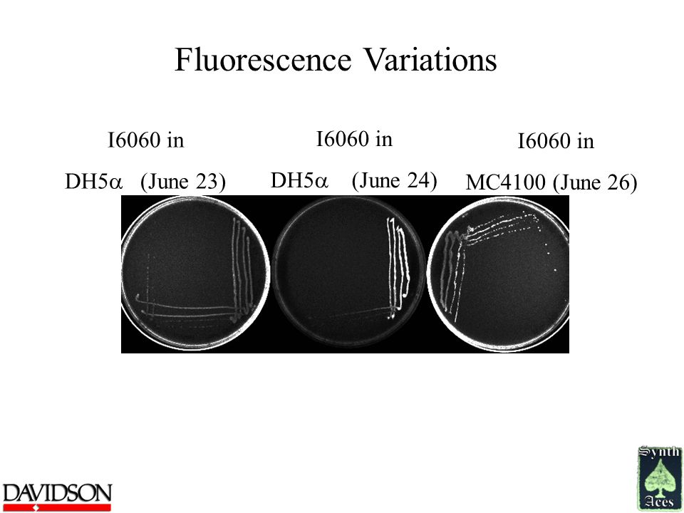 Fluorescence Variations I6060 in DH5  (June 23) I6060 in DH5  (June 24) I6060 in MC4100 (June 26)