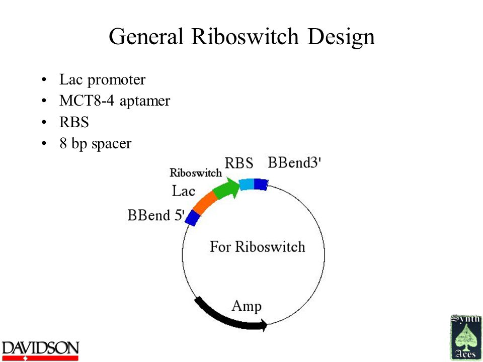 General Riboswitch Design Lac promoter MCT8-4 aptamer RBS 8 bp spacer