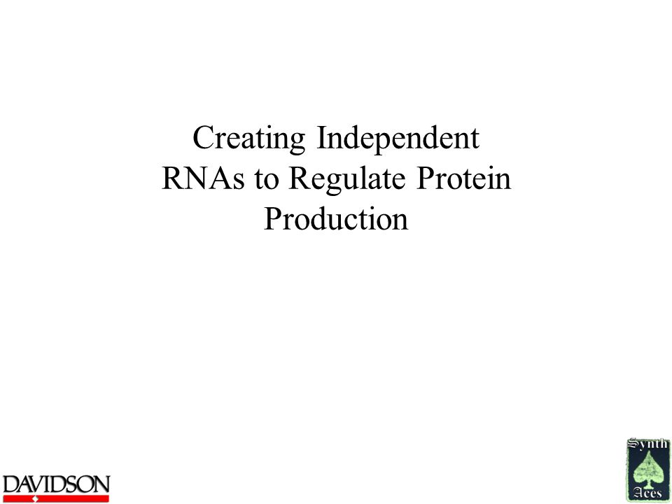 Creating Independent RNAs to Regulate Protein Production