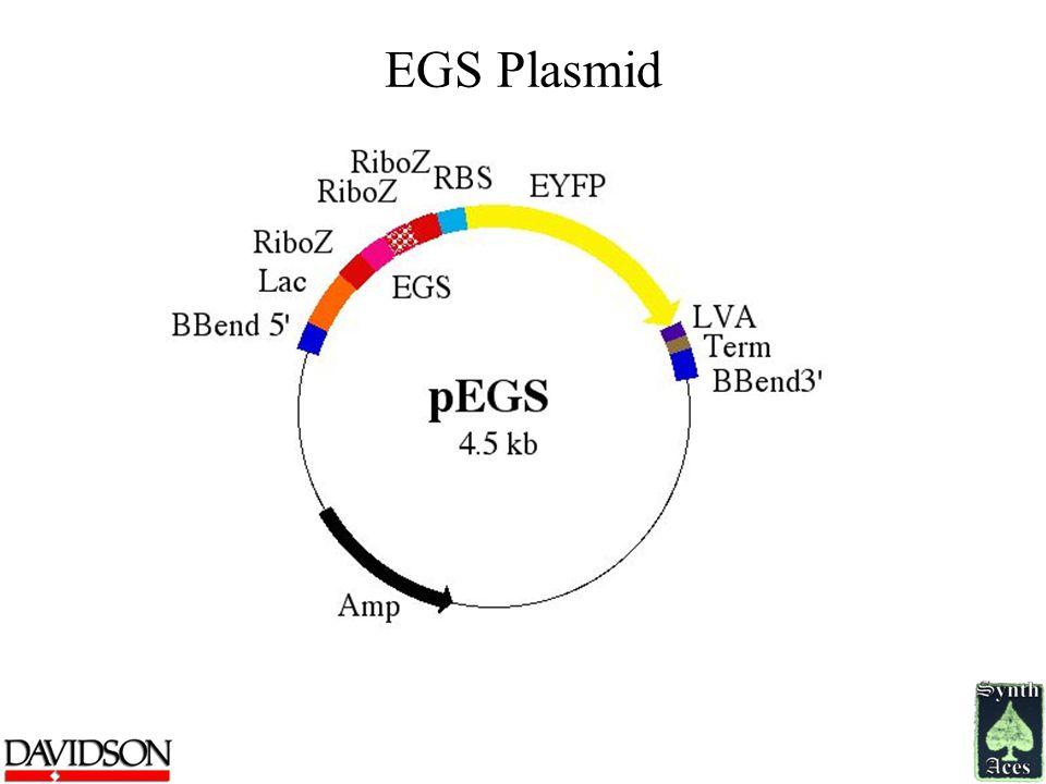 EGS Plasmid