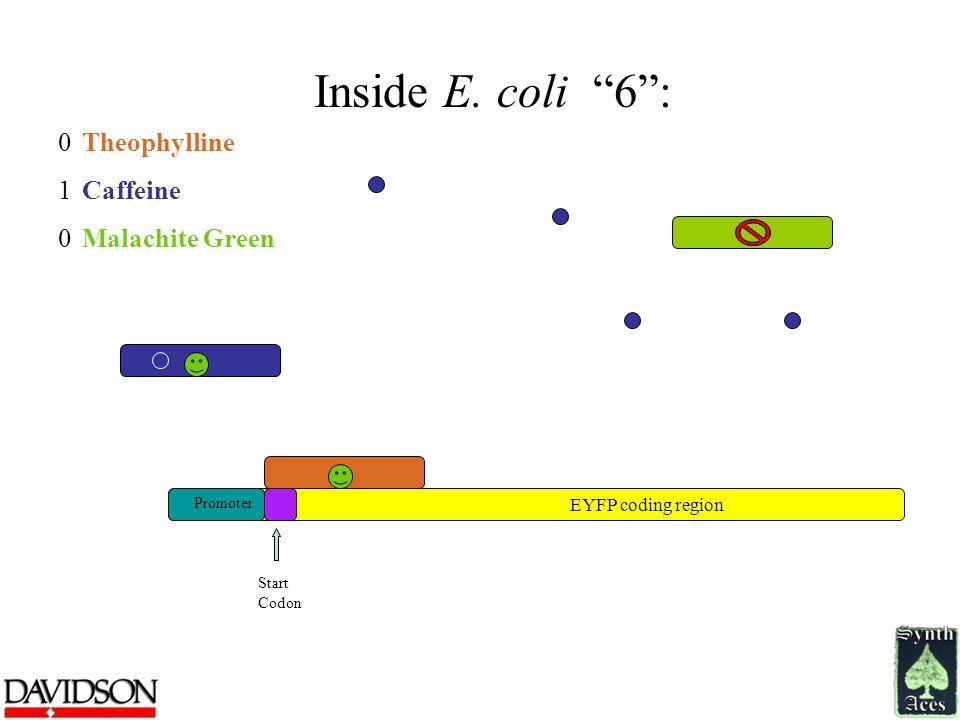 Inside E.