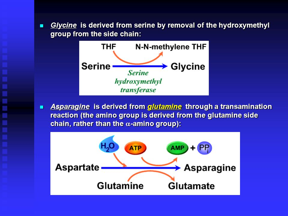 Glycine is derived from serine by removal of the hydroxymethyl group from the side chain: Glycine is derived from serine by removal of the hydroxymethyl group from the side chain: Asparagine is derived from glutamine through a transamination reaction (the amino group is derived from the glutamine side chain, rather than the  -amino group): Asparagine is derived from glutamine through a transamination reaction (the amino group is derived from the glutamine side chain, rather than the  -amino group):