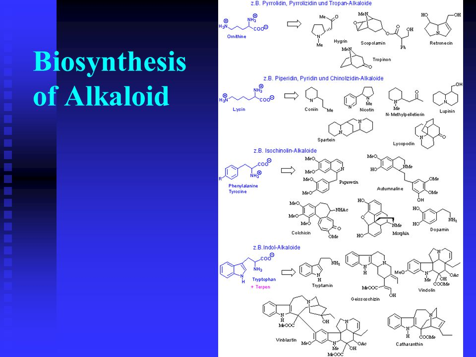 Biosynthesis of Alkaloid