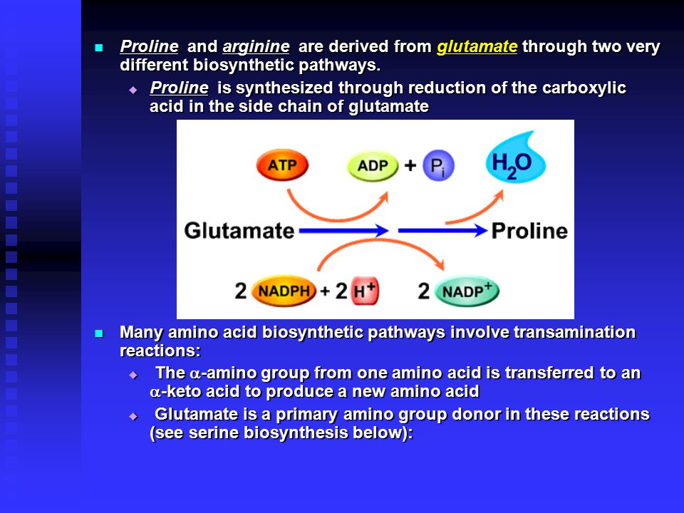 Proline and arginine are derived from glutamate through two very different biosynthetic pathways.