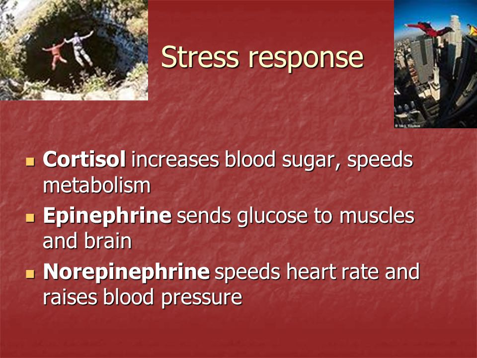 Stress response Cortisol increases blood sugar, speeds metabolism Cortisol increases blood sugar, speeds metabolism Epinephrine sends glucose to muscl