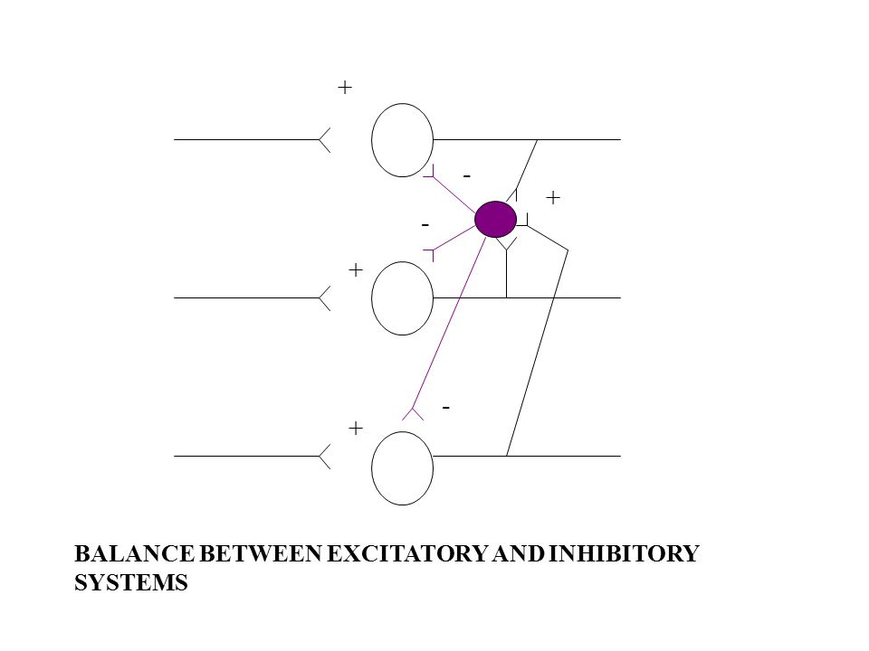 + + - - - + + BALANCE BETWEEN EXCITATORY AND INHIBITORY SYSTEMS