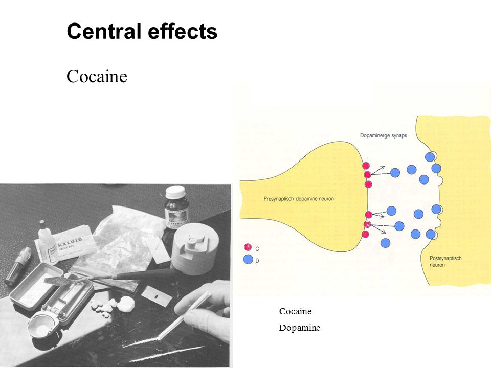 Cocaine Dopamine Cocaine Central effects