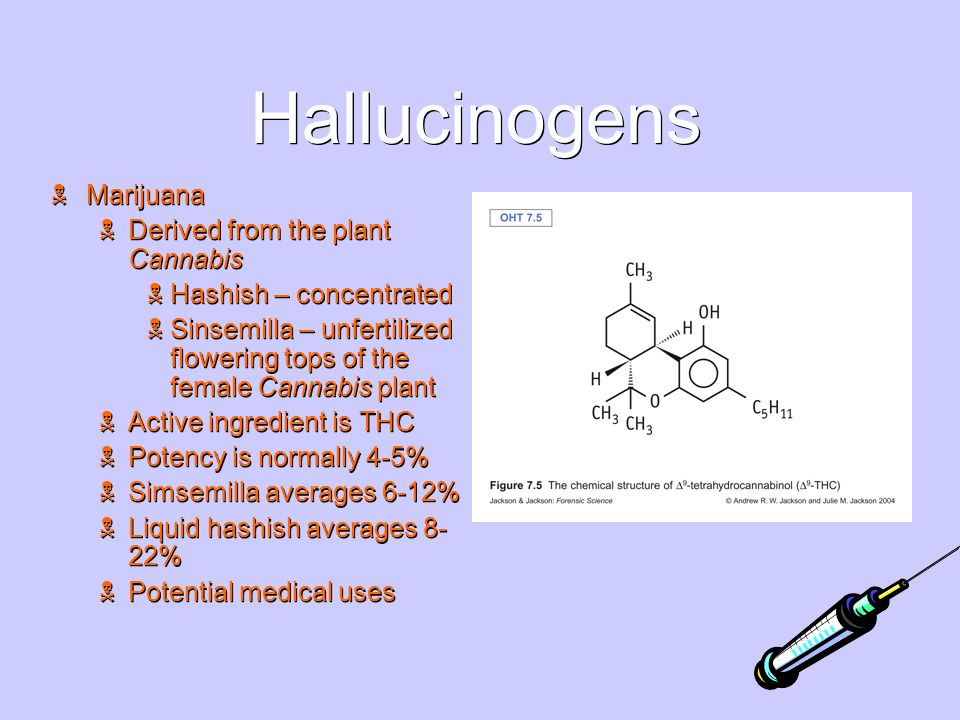 Hallucinogens  Marijuana  Derived from the plant Cannabis  Hashish – concentrated  Sinsemilla – unfertilized flowering tops of the female Cannabis plant  Active ingredient is THC  Potency is normally 4-5%  Simsemilla averages 6-12%  Liquid hashish averages 8- 22%  Potential medical uses  Marijuana  Derived from the plant Cannabis  Hashish – concentrated  Sinsemilla – unfertilized flowering tops of the female Cannabis plant  Active ingredient is THC  Potency is normally 4-5%  Simsemilla averages 6-12%  Liquid hashish averages 8- 22%  Potential medical uses