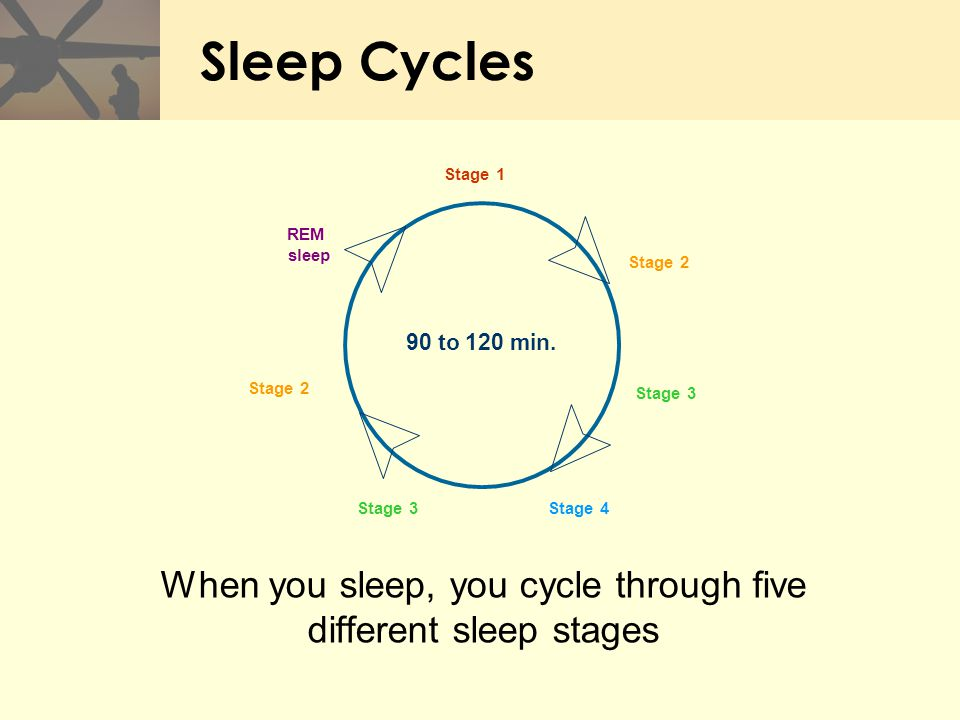 Sleep Cycles When you sleep, you cycle through five different sleep stages Stage 2 Stage 3 Stage 1 REM sleep Stage 4Stage 3 90 to 120 min. Stage 2