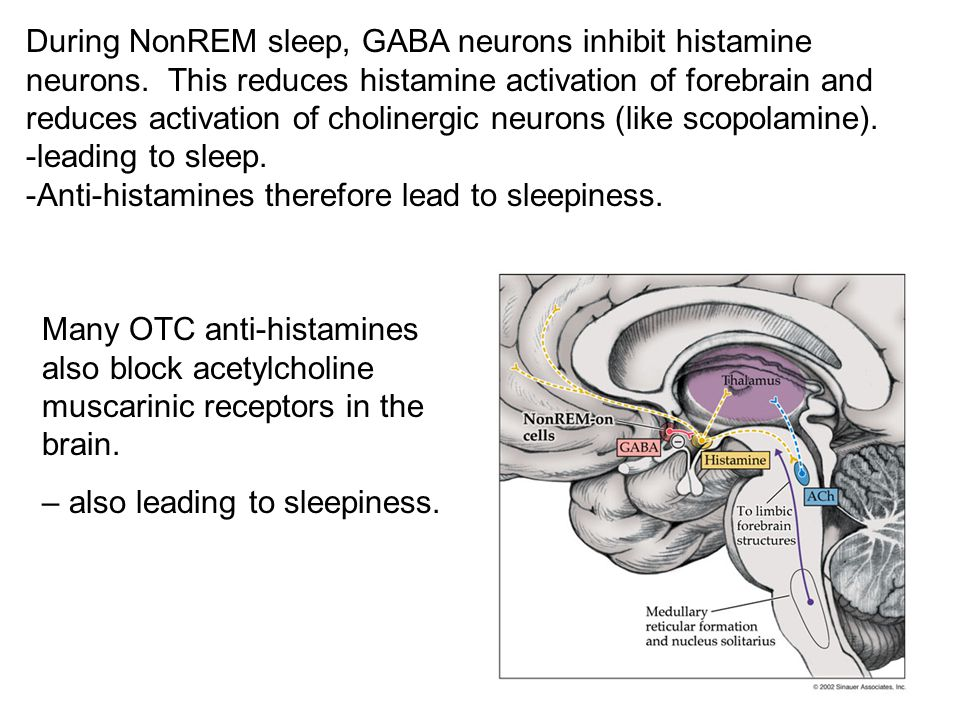 During NonREM sleep, GABA neurons inhibit histamine neurons. This reduces histamine activation of forebrain and reduces activation of cholinergic neur