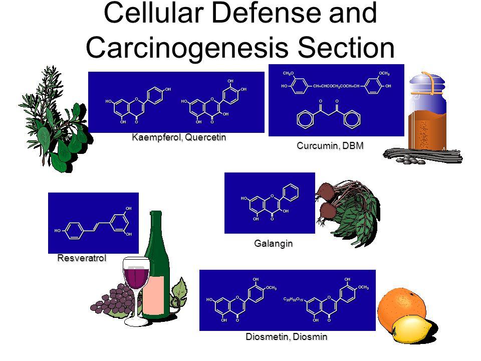 Cellular Defense and Carcinogenesis Section Curcumin, DBM Resveratrol Diosmetin, Diosmin Galangin Kaempferol, Quercetin