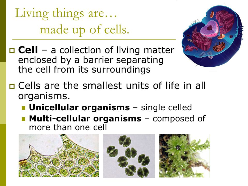 Living things are… made up of cells.  Cell – a collection of living matter enclosed by a barrier separating the cell from its surroundings  Cells ar