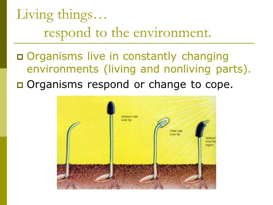 Living things… respond to the environment.  Organisms live in constantly changing environments (living and nonliving parts).  Organisms respond or c