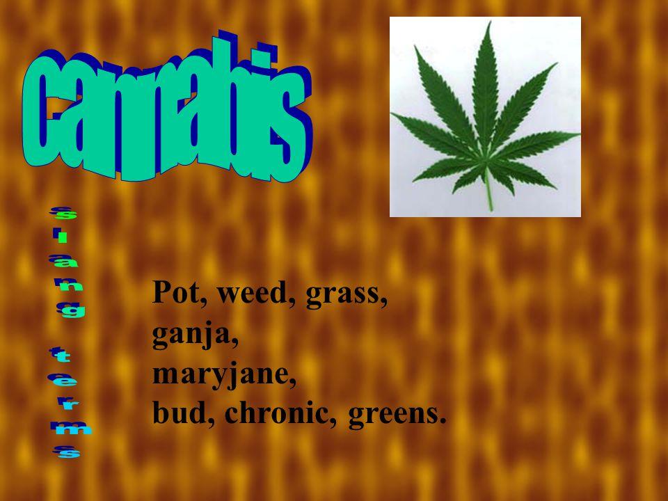 Pot, weed, grass, ganja, maryjane, bud, chronic, greens.