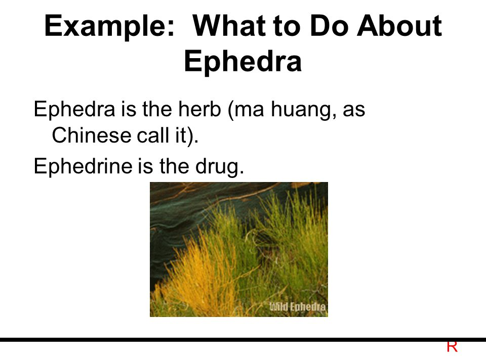 R Example: What to Do About Ephedra Ephedra is the herb (ma huang, as Chinese call it).