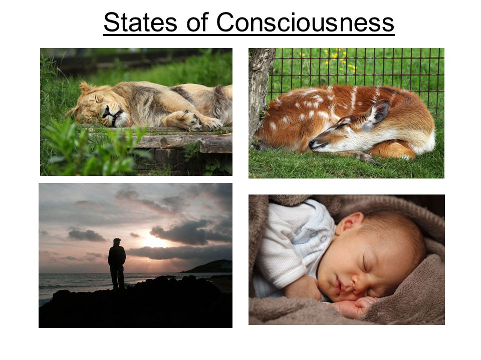 Sleep and Dreams Hypnosis Drugs and Consciousness Near-Death Experiences Meditation States of Consciousness