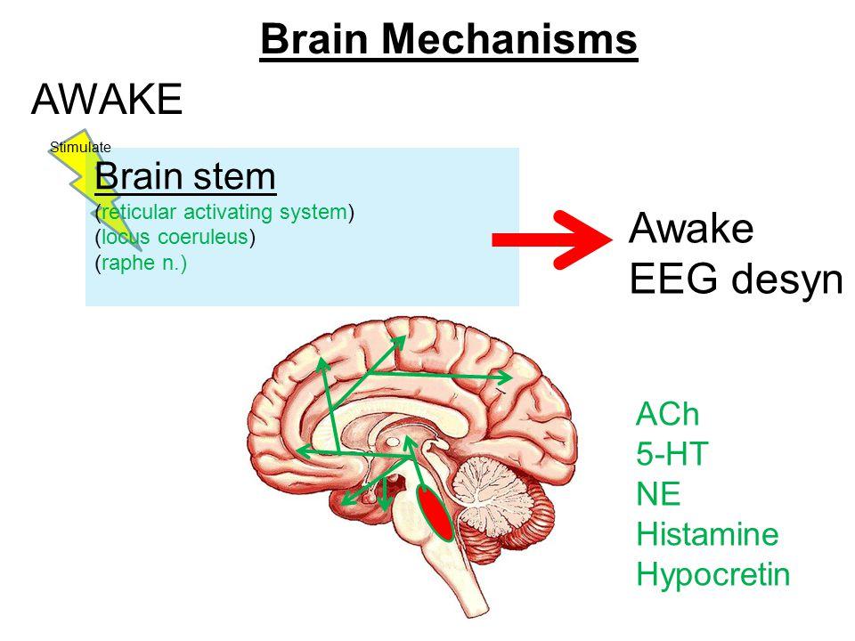 Brain Mechanisms AWAKE Brain stem (reticular activating system) (locus coeruleus) (raphe n.) Awake EEG desyn Stimulate ACh 5-HT NE Histamine Hypocretin