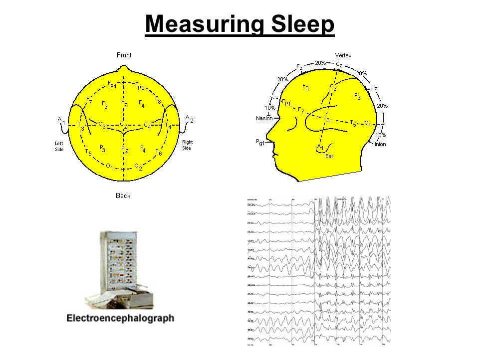 Neuronal Energy Production In wake promoting areas of the brain, ATP (the energy currency of brain cells) increases during the first few hours of sleep.