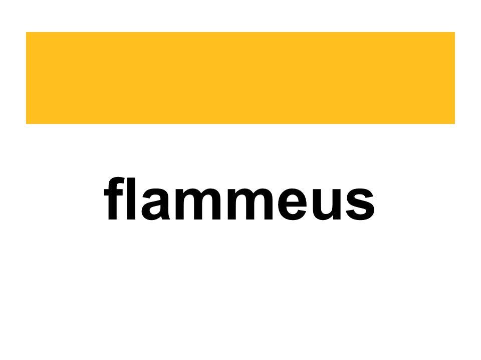 flammeus
