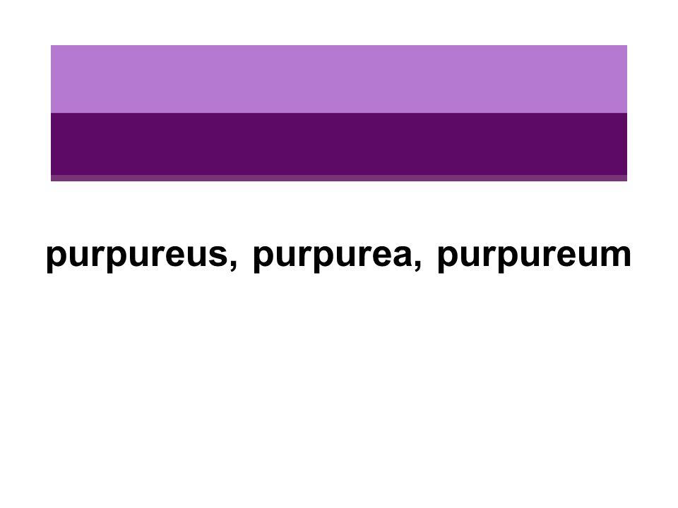 purpureus, purpurea, purpureum