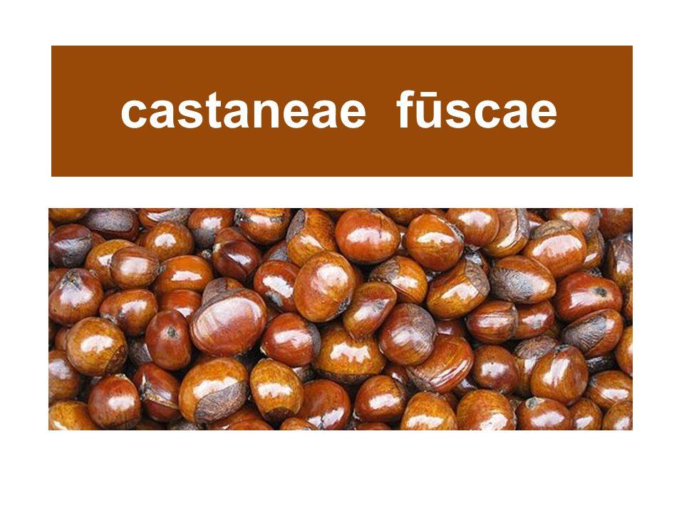 castaneae fūscae