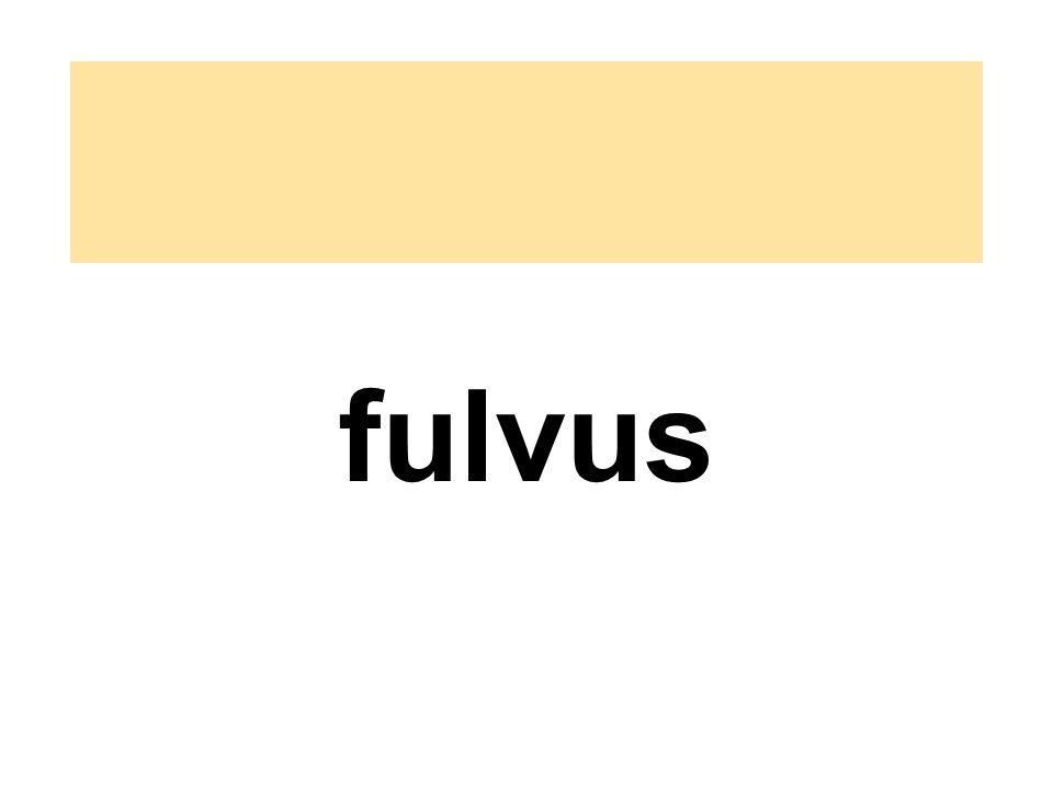 fulvus