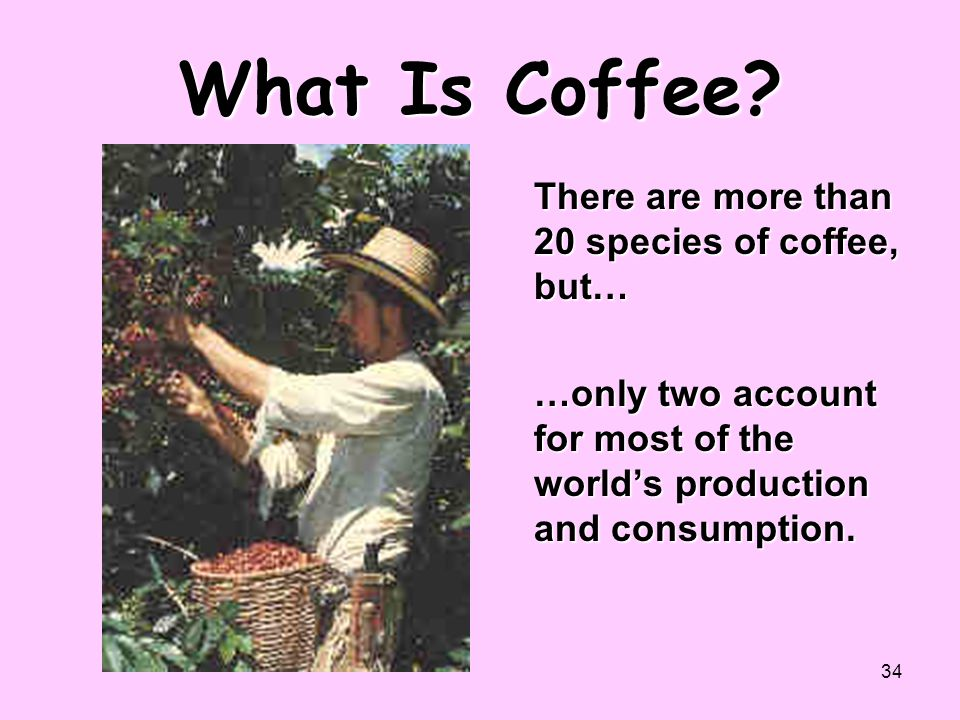 34 What Is Coffee? There are more than 20 species of coffee, but… …only two account for most of the world's production and consumption.