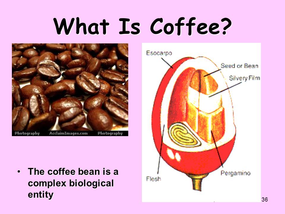 36 What Is Coffee? The coffee bean is a complex biological entityThe coffee bean is a complex biological entity
