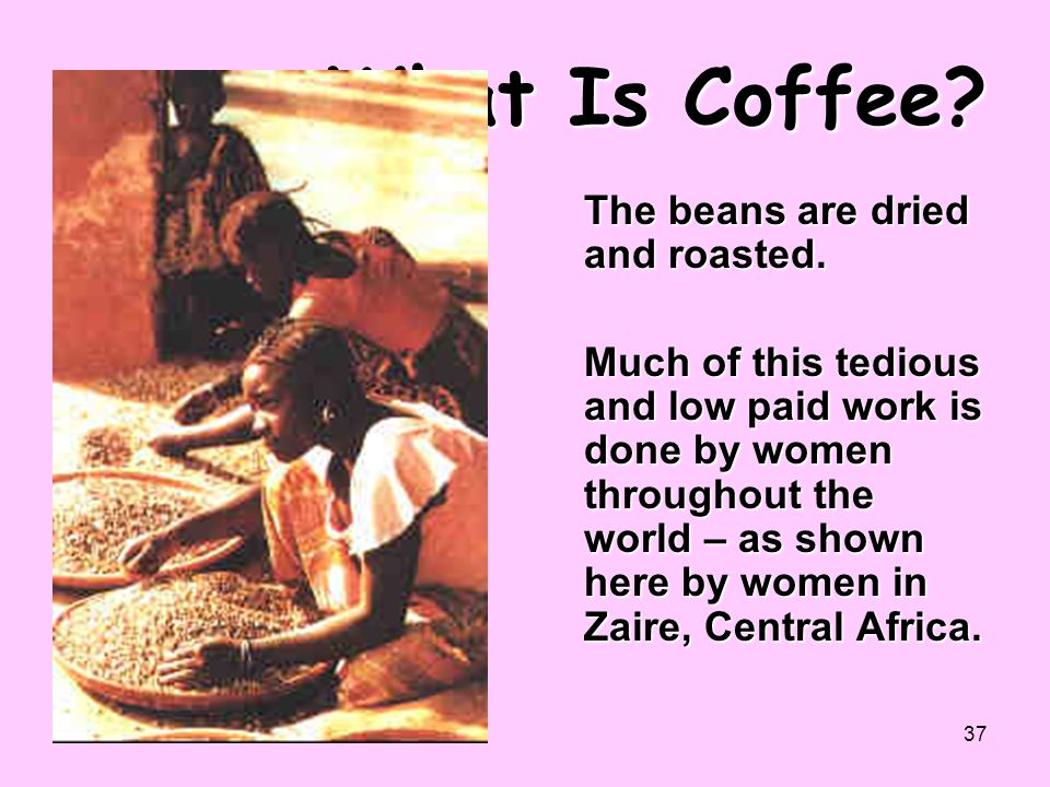 37 What Is Coffee? The beans are dried and roasted. Much of this tedious and low paid work is done by women throughout the world – as shown here by wo