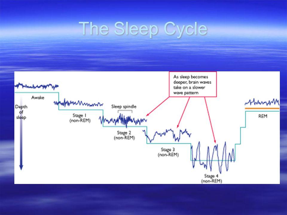 REM Sleep: The Paradox of Sleep  Sleep that occupies a little over 20% of adult's sleeping time and is characterized by Rapid eye movement Increased and irregular heart rate Increase in blood pressure Increase in breathing rate Erections in males Usually accompanied by dreams Person's body is typically paralyzed